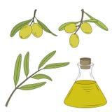 Flaska av olja och filialen av olivträdet Arkivbild