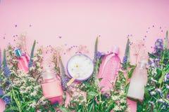 Flaska för blom- doft med nya örter och blommor på rosa bakgrund, bästa sikt Royaltyfri Fotografi