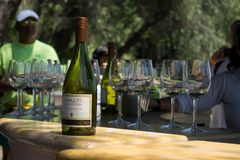Flaska för vitt vin för Concha y Toro royaltyfri fotografi