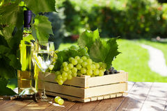 Flaska för vitt vin, exponeringsglas, vinranka och druvor royaltyfri fotografi
