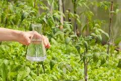 Flaska med klart vatten och gröna växter Royaltyfri Fotografi