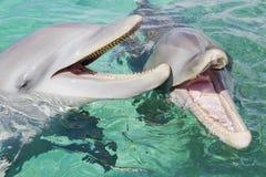 Flaska-nosed skratta för delfin Arkivfoton