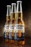 Flaskor av Corona Extra öl fotografering för bildbyråer