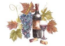 Flaskor och exponeringsglas av vin och sortiment av druvor som isoleras på vit Hand dragen vattenfärgillustration royaltyfri illustrationer