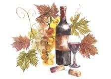 Flaskor och exponeringsglas av vin och sortiment av druvor som isoleras på vit Hand dragen vattenfärgillustration vektor illustrationer