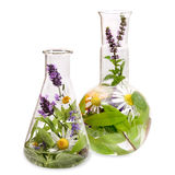 Flasks with medicinal herbs Stock Image