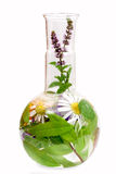 Flasks with medicinal herbs Royalty Free Stock Photo