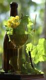 flaskwine Royaltyfri Fotografi