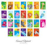 Flat Animal Alphabet. Animal English Alphabet, colorful vector illustration on  on white background Royalty Free Stock Photography