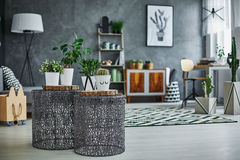 Flat apartment with plants Stock Image