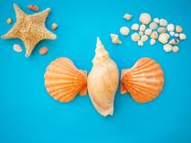 Flat Backgraound Shell BK. A beautiful flat background of a shell composition. Have a negative space. Beautiful colors in a harmonious composition stock image