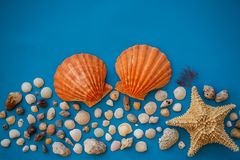 Flat Backgraound Shell BK. A beautiful flat background of a shell composition. Have a negative space. Beautiful colors in a harmonious composition stock photo