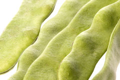 Flat Beans Isolated Stock Image