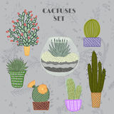 Flat colorful illustration of succulent plants and cactuses in pots and aquarium. Stock Image