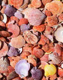 Flat and Colorful Sea Shells Background Stock Photos