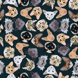 Flat dark seamless pattern pedigree cats Stock Photo