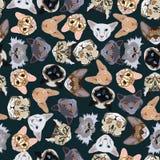 Flat dark seamless pattern pedigree cats Stock Photo