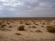 Flat desert horizont with small dry bushes in forefront Stock Images