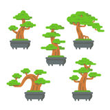Flat design bonsai tree set Royalty Free Stock Photography