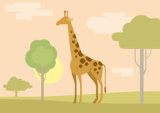 Flat design cartoon  wild animals giraffe savanna Royalty Free Stock Images