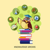 Flat design for knowledge grows concept with an owl Stock Photos