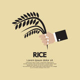 Flat Design Rice Ear In Hand Royalty Free Stock Image