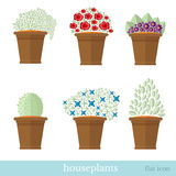 Flat design set of house plant and flower with flowerpot Stock Image