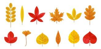 Autumn leaves set vector illustration