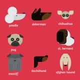 Flat dog characters set, cartoon pet animal collection chihuahua, doberman, mastiff, afgan greyhound, st bernard, pug, poodle, dac Stock Photos