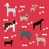 Flat dog characters set, cartoon pet animal collection chihuahua, doberman, mastiff, afgan greyhound, st bernard, pug, poodle, dac Royalty Free Stock Photo