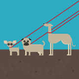 Flat dog characters set, cartoon pet animal collection chihuahua, pug and greyhound walking on the lead Royalty Free Stock Images
