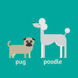 Flat dog characters set, cartoon pet animal collection, pug and poodle Stock Photography