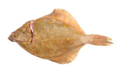 Flat fish on white Royalty Free Stock Photography