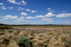 Flat grassland landscape with white clouds, Great Ocean Road, Australia. Flat grassland landscape with white royalty free stock photos
