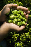 The flat hand with hop Stock Image