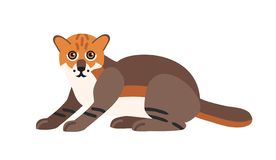 Flat-headed cat isolated on white background. Cute wild exotic carnivorous animal. Adorable wild Asian cat or felid. Endangered species of Asia. Colorful stock illustration