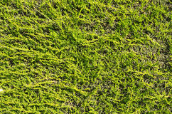 Flat Hedge Background Royalty Free Stock Photography