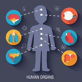 Flat human organs icons illustration concept. Royalty Free Stock Photos