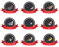 Flat icon birds with names Stock Image