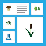 Flat Icon Ecology Set Of Cascade, Cattail, Berry And Other Vector Objects. Also Includes Waterfall, Forest, Wood. Flat Icon Ecology Set Of Cascade, Cattail Stock Photography