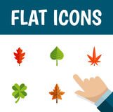Flat Icon Leaves Set Of Alder, Hickory, Leafage And Other Vector Objects. Also Includes Frond, Aspen, Leaf Elements. Stock Images