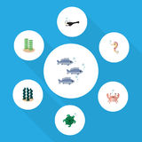 Flat Icon Marine Set Of Alga, Tortoise, Hippocampus And Other Vector Objects. Also Includes Hippocampus, Angler, Alga. Flat Icon Marine Set Of Alga, Tortoise Stock Photo