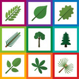 Flat Icon Natural Set Of Evergreen, Park, Alder And Other Vector Objects. Also Includes Acacia, Leaf, Tree Elements. Royalty Free Stock Photography