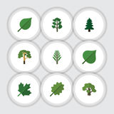 Flat Icon Nature Set Of Alder, Wood, Tree And Other Vector Objects. Also Includes Alder, Foliage, Hickory Elements. stock illustration