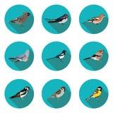 Flat icons birds Stock Photos