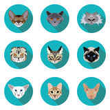 Flat icons set of pedigreed cats Stock Images