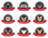 Flat icons set of pedigreed cats with the names Stock Photos