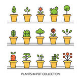 Flat icons set of pot plants garden. Flowers and herbs Royalty Free Stock Photography