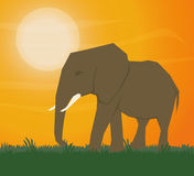 Flat illustration about africa design Stock Photography