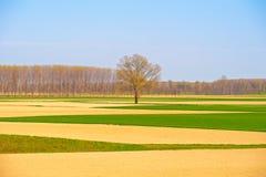 Flat land geometries Stock Photography